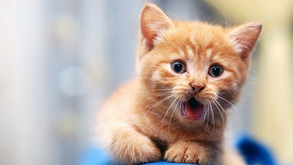 Τα κορυφαία videos με γάτες του 2013