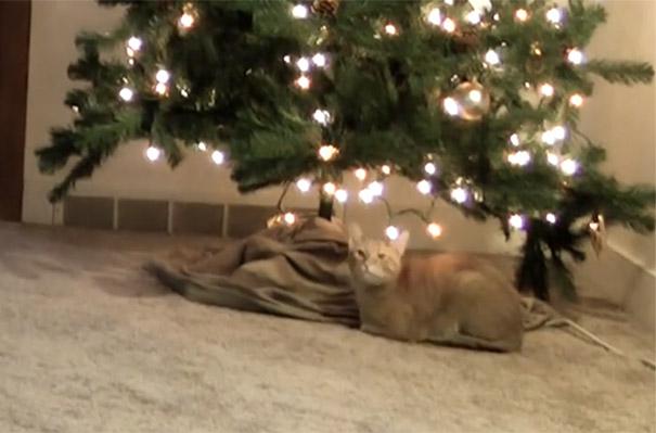 Η κρυφή επίθεση μιας γάτας στο χριστουγεννιάτικο δέντρο