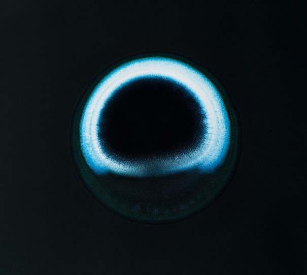 Ναρκωτικές ουσίες κάτω από το μικροσκόπιο (9)