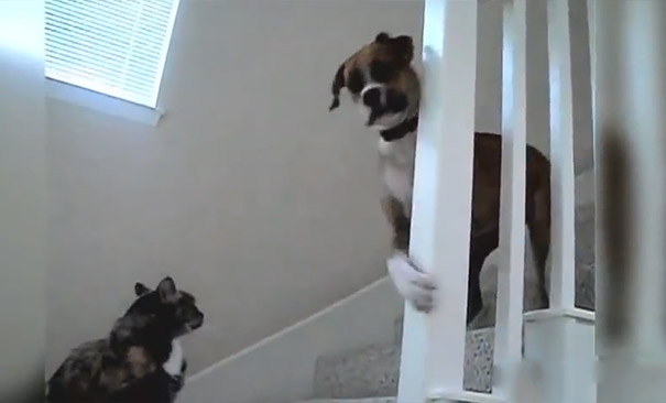 Όταν οι σκύλοι τρέμουν τη γάτα του σπιτιού