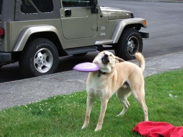 Περίεργες φωτογραφίες σκύλων (8)