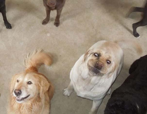 Περίεργες φωτογραφίες σκύλων (11)