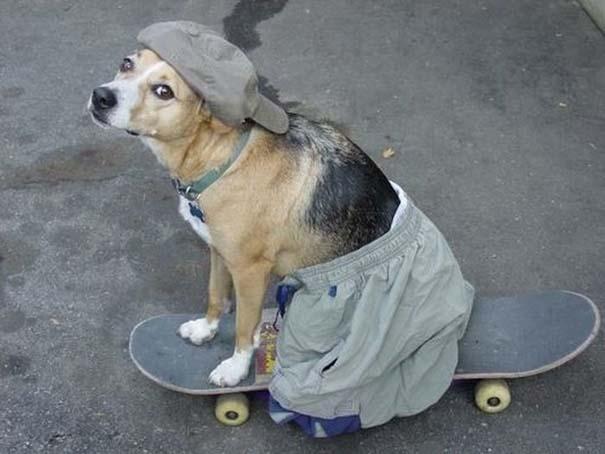 Περίεργες φωτογραφίες σκύλων (20)