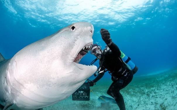 Ταΐζοντας έναν καρχαρία | Φωτογραφία της ημέρας