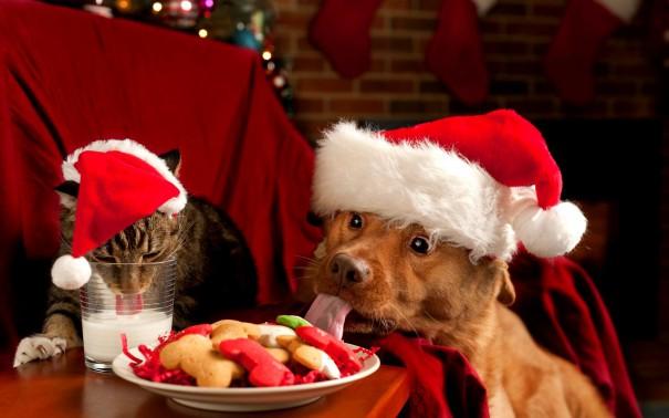Χριστουγεννιάτικο φαγοπότι   Φωτογραφία της ημέρας