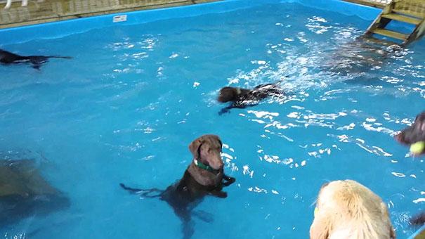 Σκύλος δεν καταλαβαίνει την έννοια της κολύμβησης