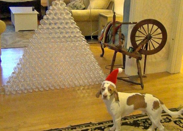 Σκύλος παίρνει δώρο 210 πλαστικά μπουκάλια και τρελαίνεται