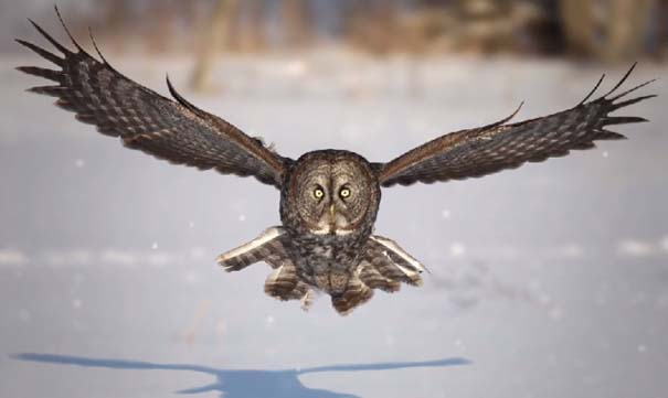 Εκπληκτικό Super Slow Motion της χειμερινής ζωής (1)