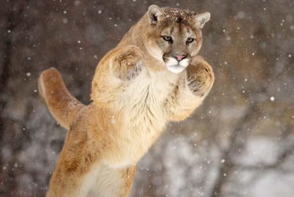 Εκπληκτικό Super Slow Motion της χειμερινής ζωής (2)