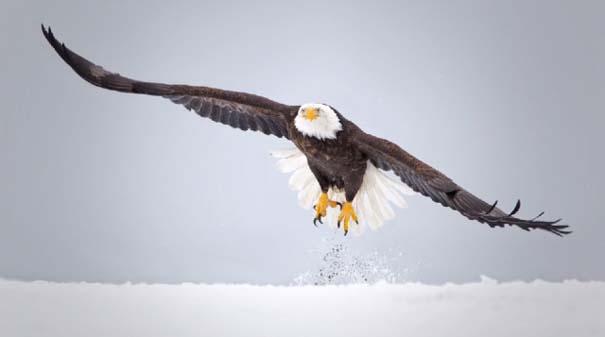 Εκπληκτικό Super Slow Motion της χειμερινής ζωής (3)