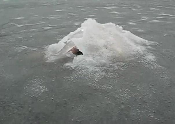 Μυστηριώδες πλάσμα ξεπροβάλλει από παγωμένη λίμνη
