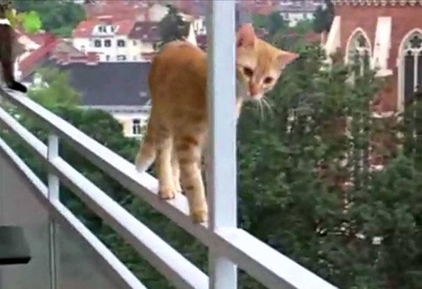 Τι διαφορά έχουν οι γάτες από τους καπνιστές;