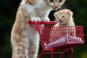 Ζώα και οι μικροσκοπικοί «κλώνοι» τους (29)