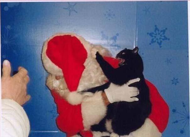 Ζώα που ανυπομονούν να τελειώσουν οι γιορτές (2)