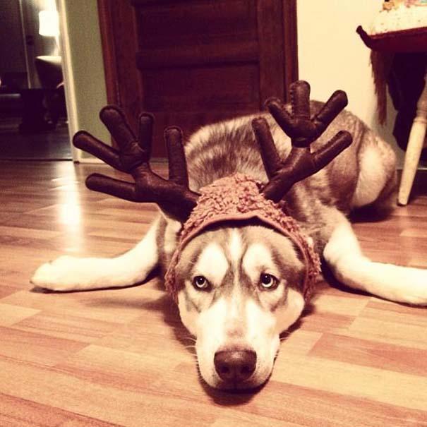 Ζώα που ανυπομονούν να τελειώσουν οι γιορτές (4)