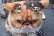 Ζώα που ανυπομονούν να τελειώσουν οι γιορτές (5)