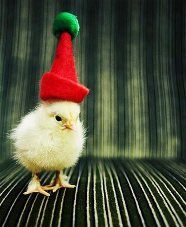 Ζώα που ανυπομονούν να τελειώσουν οι γιορτές (8)