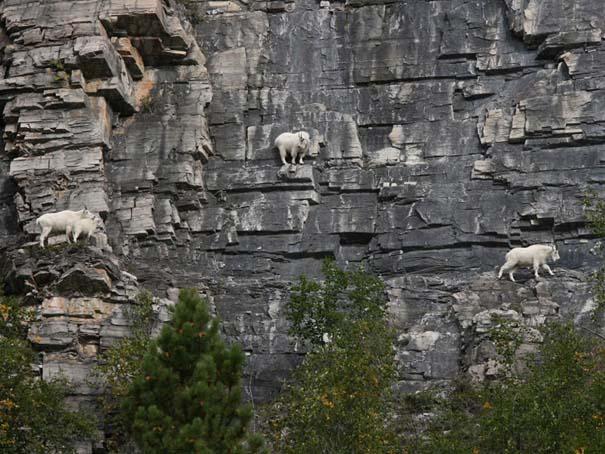 Αγριοκάτσικα - ορειβάτες που δεν ξέρουν τι θα πει φόβος (5)