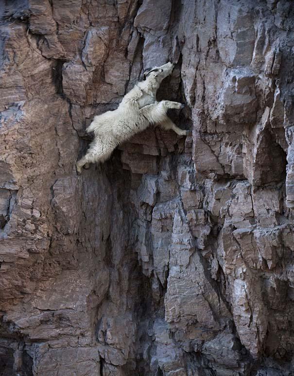 Αγριοκάτσικα - ορειβάτες που δεν ξέρουν τι θα πει φόβος (6)