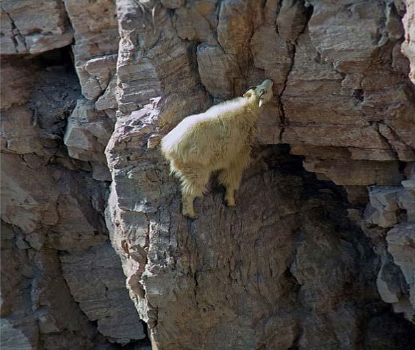 Αγριοκάτσικα - ορειβάτες που δεν ξέρουν τι θα πει φόβος (7)