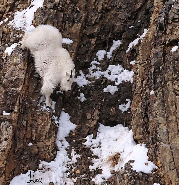 Αγριοκάτσικα - ορειβάτες που δεν ξέρουν τι θα πει φόβος (9)