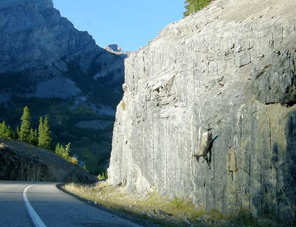 Αγριοκάτσικα - ορειβάτες που δεν ξέρουν τι θα πει φόβος (11)
