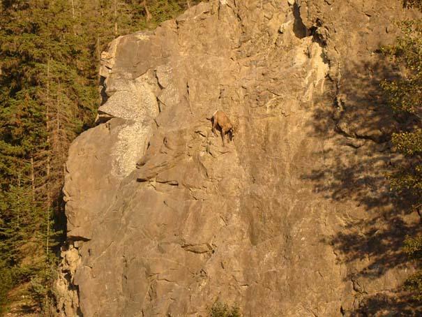Αγριοκάτσικα - ορειβάτες που δεν ξέρουν τι θα πει φόβος (13)