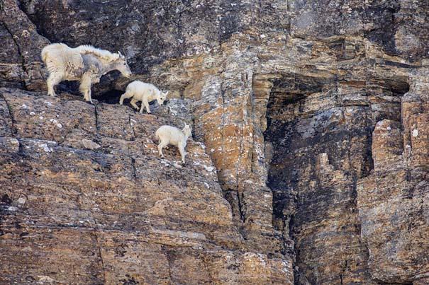 Αγριοκάτσικα - ορειβάτες που δεν ξέρουν τι θα πει φόβος (14)