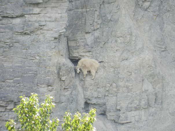 Αγριοκάτσικα - ορειβάτες που δεν ξέρουν τι θα πει φόβος (15)