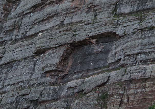 Αγριοκάτσικα - ορειβάτες που δεν ξέρουν τι θα πει φόβος (18)