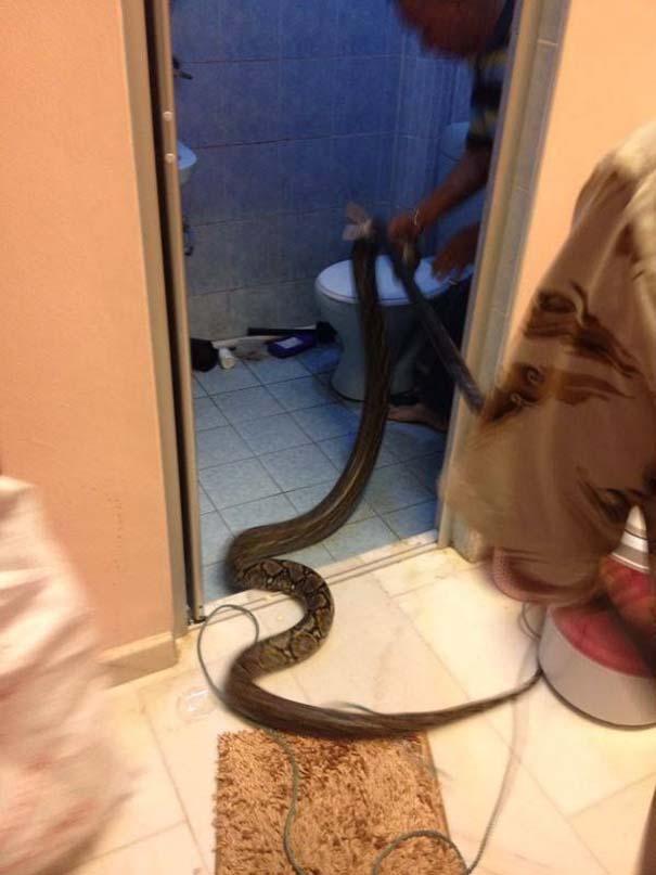 Ένας αναπάντεχος επισκέπτης στην τουαλέτα (4)