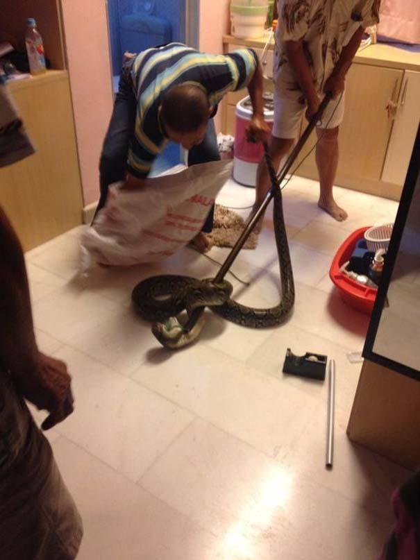 Ένας αναπάντεχος επισκέπτης στην τουαλέτα (5)