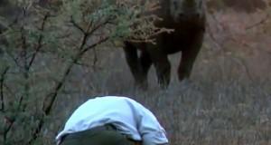 Άνδρας έρχεται αντιμέτωπος με σπάνιο και επιθετικό μαύρο ρινόκερο (Video)