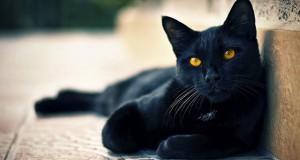 Η αντίδραση μιας γάτας στην επιστροφή του ιδιοκτήτη της μετά από 6 μήνες (Video)