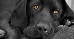 Η αντίδραση ενός σκύλου στην επιστροφή του ιδιοκτήτη του μετά από 6 μήνες (Video)