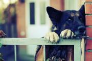Αποδράσεις σκύλων