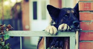 Η μεγάλη των σκύλων απόδραση (Video)