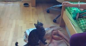 Οι πιο ατσούμπαλες γάτες του κόσμου (Video) #2