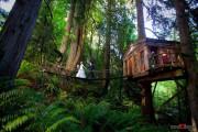 Εντυπωσιακά δενδρόσπιτα για μικρές αποδράσεις κοντά στο Seattle (1)