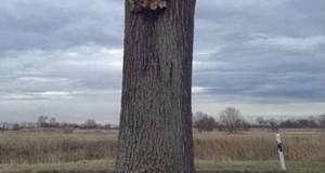 Το δέντρο που αιωρείται
