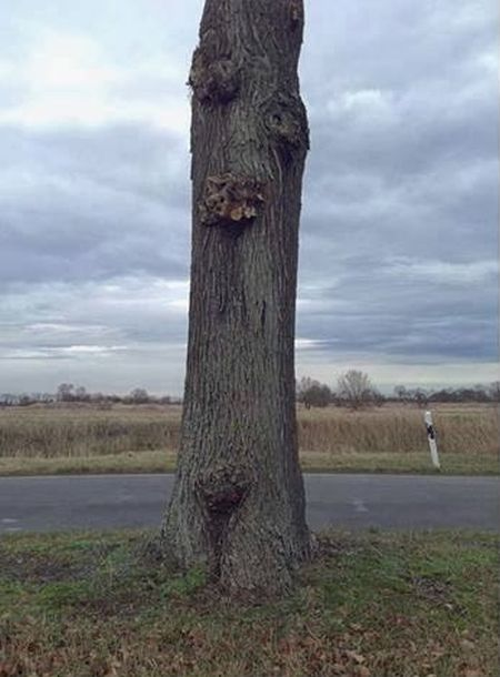 Το δέντρο που αιωρείται (1)
