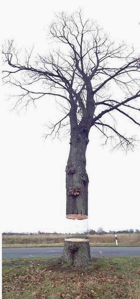 Το δέντρο που αιωρείται (3)