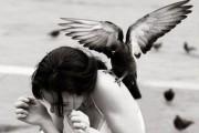 Επιθέσεις πτηνών σε ανθρώπους