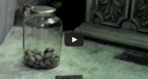 Έξυπνο ποντίκι κλέβει τροφή από κλειστό βάζο (Video)