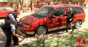 Φάρσα: Το πιο δυνατό σκυλάκι στον κόσμο (Video)