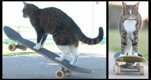 Γάτα κάνει πατίνι και πηδάει πάνω από σκύλο (Video)