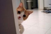 Όταν οι γάτες παραμονεύουν...