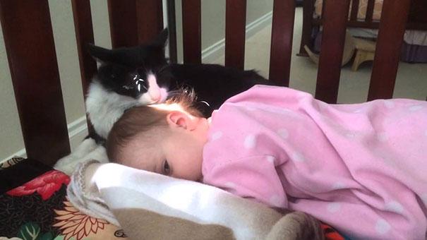 Γάτα «περιποιείται» τα μαλλιά ενός μικρού κοριτσιού