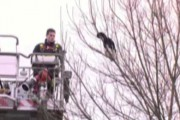 Γάτος συγκεντρώνει 7 πυροσβέστες και κάμερες για να σωθεί τελικά μόνος του