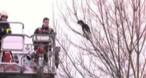 Γάτος συγκεντρώνει 7 πυροσβέστες και κάμερες για να σωθεί τελικά μόνος του (Video)
